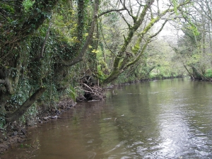 Looking downstream from above the Flats - overhanging branches on left hand side