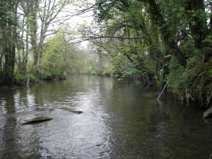 Looking upstream above the Flats - removing overhanging branches