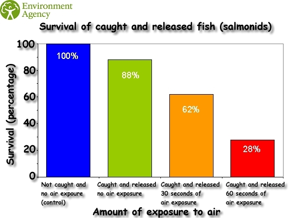 catch and release survival rates