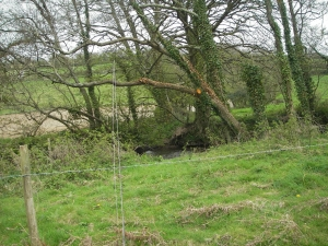 Overhead obstructions removed from site of proposed stile in the tunnel above Bramble Pool